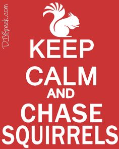 """We have available a stencil to create your version of """"Keep Calm"""" signs. The stencil is designed to work on a standard 8x10 canvas and with the symbols from our sorority stencils. The artwork for """"Chase..."""" is available to our customers for download. #alpha, #gamma #delta #gam, #squirrel, #keep calm, #sister, #big sister, #greek, #sorority, #greek, #craft, #handmade"""