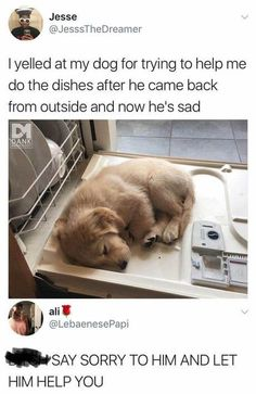 20 Adorable and Hilarious Animal Moments On Weekend - haarschnitte - 20 Adorabl. - 20 Adorable and Hilarious Animal Moments On Weekend – haarschnitte – 20 Adorable and Hilarious - Funny Animal Memes, Cute Funny Animals, Dog Memes, Funny Animal Pictures, Cute Baby Animals, Funny Cute, Funny Dogs, Funny Memes, Cute Puppy Pictures