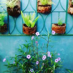Meu jardim vertical!My garden!I love it!