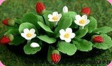 JARDINAGE - Plant de FRAISES miniatures