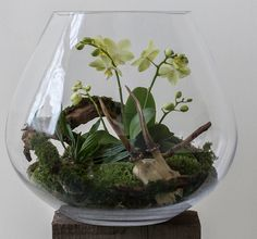 """Secret Gardens """" Beautiful terrariums with fossils, skulls, and other oddities by Ken Martin of Hermetica (London). """" View On WordPress Orchid Plants, Air Plants, Garden Plants, Indoor Plants, Orchid Terrarium, Glass Terrarium, Succulent Terrarium, Terrarium Ideas, Decoration Plante"""