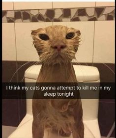 All funny and hilarious animals. Funny dogs, cats, birds and more. Here is 28 Funny Animals Of The Day Funny Animal Jokes, Funny Cat Memes, Cute Funny Animals, Cute Baby Animals, Cute Cats, Funny Captions, Memes Humor, Top Memes, Pretty Cats