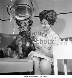 Image result for hair salon dog