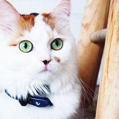 Pretty eyes @yummypets #Myrtille