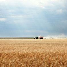 Nebraska wheat field. Country Farm, Country Roads, Farm Photography, Us Holidays, Perspective, Wheat Fields, Big Sky, Farm Life, Nebraska