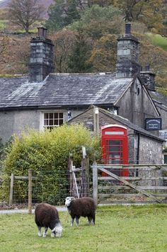 Herdwick Sheep, Red Phone Box and lovely Lake District Stone Cottage in Borrowdale, Cumbria, England: