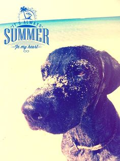 #DOG #summer #sun #design #animals
