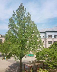 인문 . . #tree #landscape #spring #summer #sky #skyporn #나무 #봄 #하늘