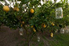 Tea Candles in Mason Jars in Lemon Trees. Buranco Vineyard, Monterosso, Cinque Terre. By Cinque Terre Wedding. www.cinqueterrewedding.com