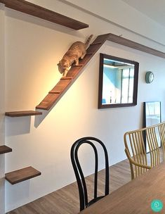 5 Cat-Friendly Playgrounds At Home (pictured) a built-in cat walkway idea Cat Walkway, Niche Chat, Cat Climbing Wall, Cat House Diy, Cat Playground, Playground Design, Cat Shelves, Cat Enclosure, Cat Room