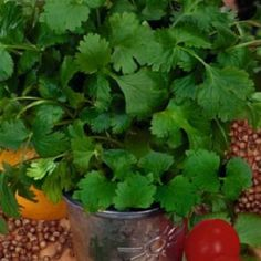 Coriandru este una din cele mai cunoscute plante aromatice. Se foloseste in bucatarii din intreaga lume.
