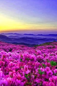 Ideas beautiful nature photography flowers scenery for 2019 Mother Earth, Mother Nature, Beautiful World, Beautiful Places, Beautiful Flowers Photos, Amazing Places, Image Nature, Art Nature, Nature Pictures