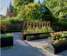 Alamo Garden Alamo, California This is my personal vegetable garden which was inspired by Andrea Cochran's gardens and the Getty museum in Los Angeles. Esther Suzuki Arnold and I collaborated on the design of this vegetable garden. I wanted to create a simple vegetable garden with raised vegetable boxes that would act as sculpture and …