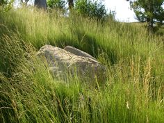 SQLA Inc. // West Hills Planting Commercial Landscape Design, West Hills, Planting, Country Roads, Plants
