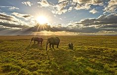 Come experience the amaizing African sunset along side the lovely wild animals with https://www.ticketsasa.com/holidays/all?view=deallisting&filter_city[0]=9
