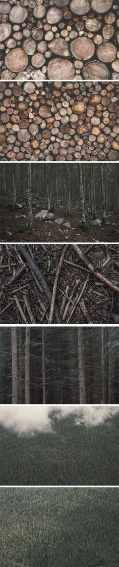 High-resolution Forest & Wood Stock Photos. Take a look at these great photos & you will get a great result with just one click!
