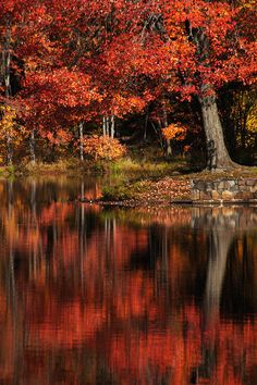✯ Reflections of Red