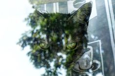 'One With The World' August 14 2016  die Katze (sgl) Die Katzen (pl) Cat(s)  This might look like a montage of different photos but it's actually one pic I took standing outside & right on front of our kitchen's window.  Seems Luca has a strong connection to nature if you know what I mean!  There's a new video on the VlogDave channel! Today I read an talk about the German story of the 'Daumenlutscher' (the thumb-sucker). It's intended for children but it's pretty explicit!  Find the video on…