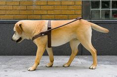 Tony Matelli's Stray Dog (2014).  COURTESY MARLBOROUGH CHELSEA