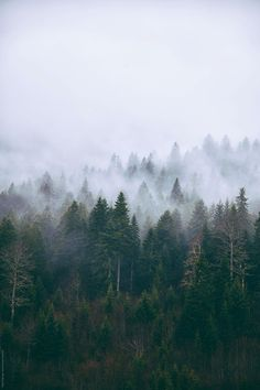 Misty forest of pine trees on the mountains by Maja Topcagic for Stocksy United Misty Forest, Forest Mountain, Foggy Forest, Forest Photography, Mountain Photography, Forest Pictures, Nature Pictures, Bergen, Pine Trees Forest