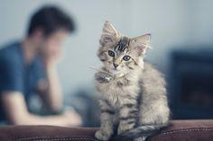 little kitty :)