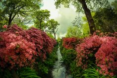 Isabella Plantation Richmond Park London by Simon Hadleigh-Sparks (International Garden Photographer of the Year IGPOTY 9 2016 Finalist) Day Trips From London, Things To Do In London, Amazing Gardens, Beautiful Gardens, Beautiful Homes, Beautiful Places, Dating In London, Hidden Garden, Richmond Park