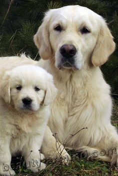 beautiful dog breeds in the world - Here are Most Beautiful Dogs Breeds in The World in 2017-2018. These are some dogs that are absolutely charming they just are more likely to steal your attention at first look. #beautifuldogbreed #dogbreed #cutedog #awesomedog