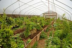 Amazing amazing high tunnel setup with almost a permaculture feel. Great Oregon blog too, Wayward Spark