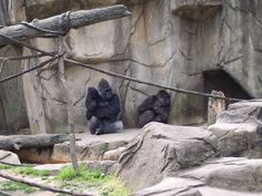 "Gorillas: ""What's going on over there?"""