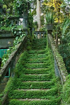 Steps, swathed in Green.
