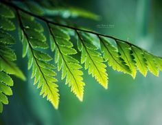 Shades of Green by John-Peter.deviantart.com on @deviantART