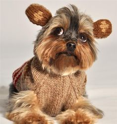 Chilly Dog Monkey Hoodie Dog Sweater | PupLife Dog Supplies