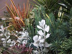 Succulent and Native Garden
