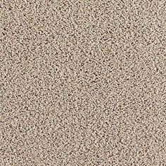 Carpet Splurge Dried Herb 846 thumbnail #1