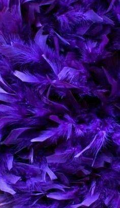 purple.quenalbertini: Purple feathers