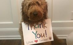 When Tucker the dog got trapped in an icy pond after chasing after ducks, his family knew that they had to act fast.
