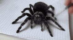 Terrifying tarantula is actually a remarkable 3D illusion