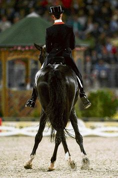 Anky Van Grunsven is my favorite athlete. All The Pretty Horses, Beautiful Horses, Cross Country Jumps, Horse Riding Tips, Dressage Horses, Horse Farms, Horse Pictures, Equine Photography, Equestrian
