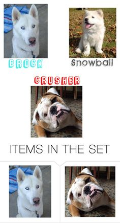 """""""My brothers dogs & names"""" by oliviamagic ❤ liked on Polyvore featuring art"""
