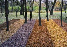 Ivan Kavka- lesní koberec pro náhodného houbaře VI (1986-1998)