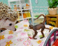 Twenty Incredible Hedgehog Facts That Will Astound You Hedgehog Facts, Baby Hedgehog, Introductory Paragraph, Hedgehogs, Cute Baby Animals, The Twenties, Cute Babies, Mental Health, Funny Memes