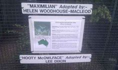 Lee Dixon, who knows how to name an owl. | 29 People Who Make You Proud To Be British