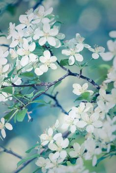 ❀ Spring-Flowers May 23