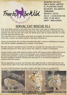 This is an emergency. Two Serval Cats need to be moved to Free To Be Wild rescue and rehabilitation center now to assure their survival. http://www.nikela.org/projects/serval-cat-rescue-911/