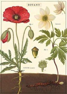 Botany Wrap (K7)