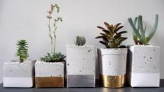 Indoor plants are back in a big way and even the most foliage-challenged can enjoy this trend.