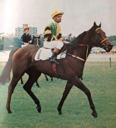 SHARIF (Aus) B c 1968, Khalif - Nulla Girl. Ray Selkrig up. Winner 1972 VRC Turnbull Stakes.