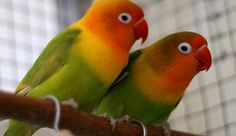 3 Tempat Penangkaran Burung Kicauan Terbanyak