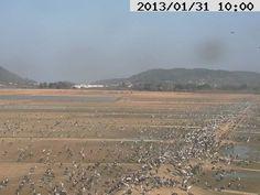 2013年1月31日 第一陣の北帰行が始まった出水の鶴 その1 午前10時