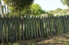 Cactus Fence Bonaire